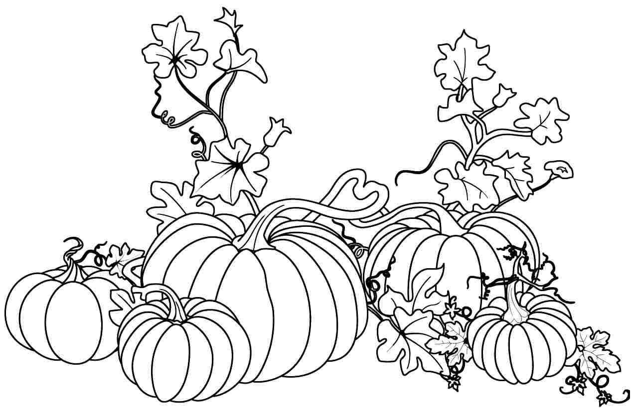 Pumpkin Vines Drawing At Getdrawings