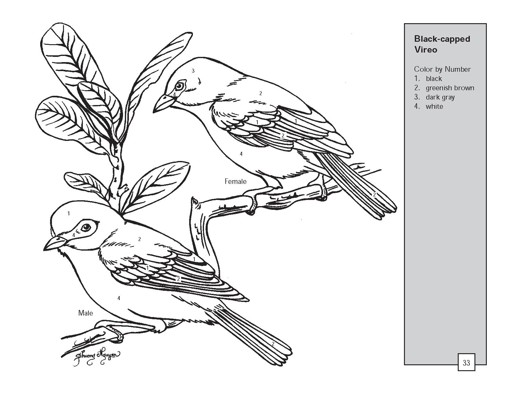 Realistic Bird Drawing At Getdrawings