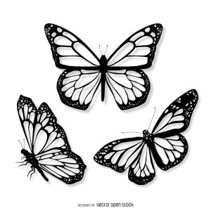 butterfly realistic drawing getdrawings