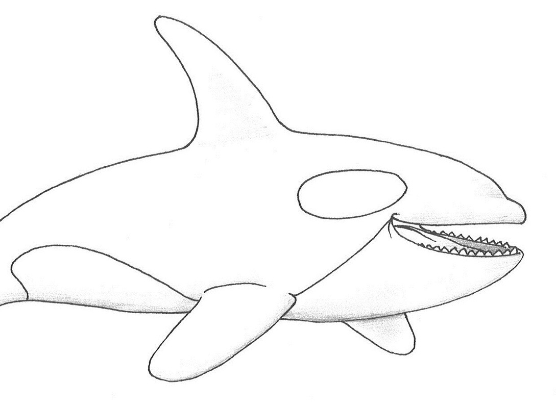 Realistic Dolphin Drawing At Getdrawings
