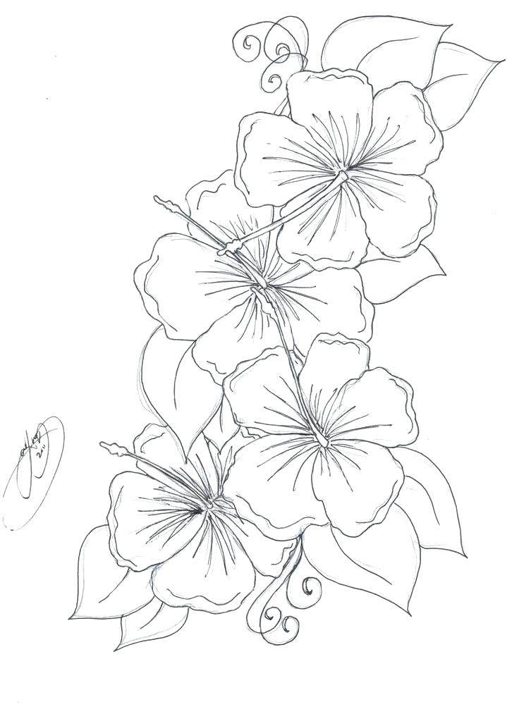 Tropical Flowers Drawing At Getdrawings Com
