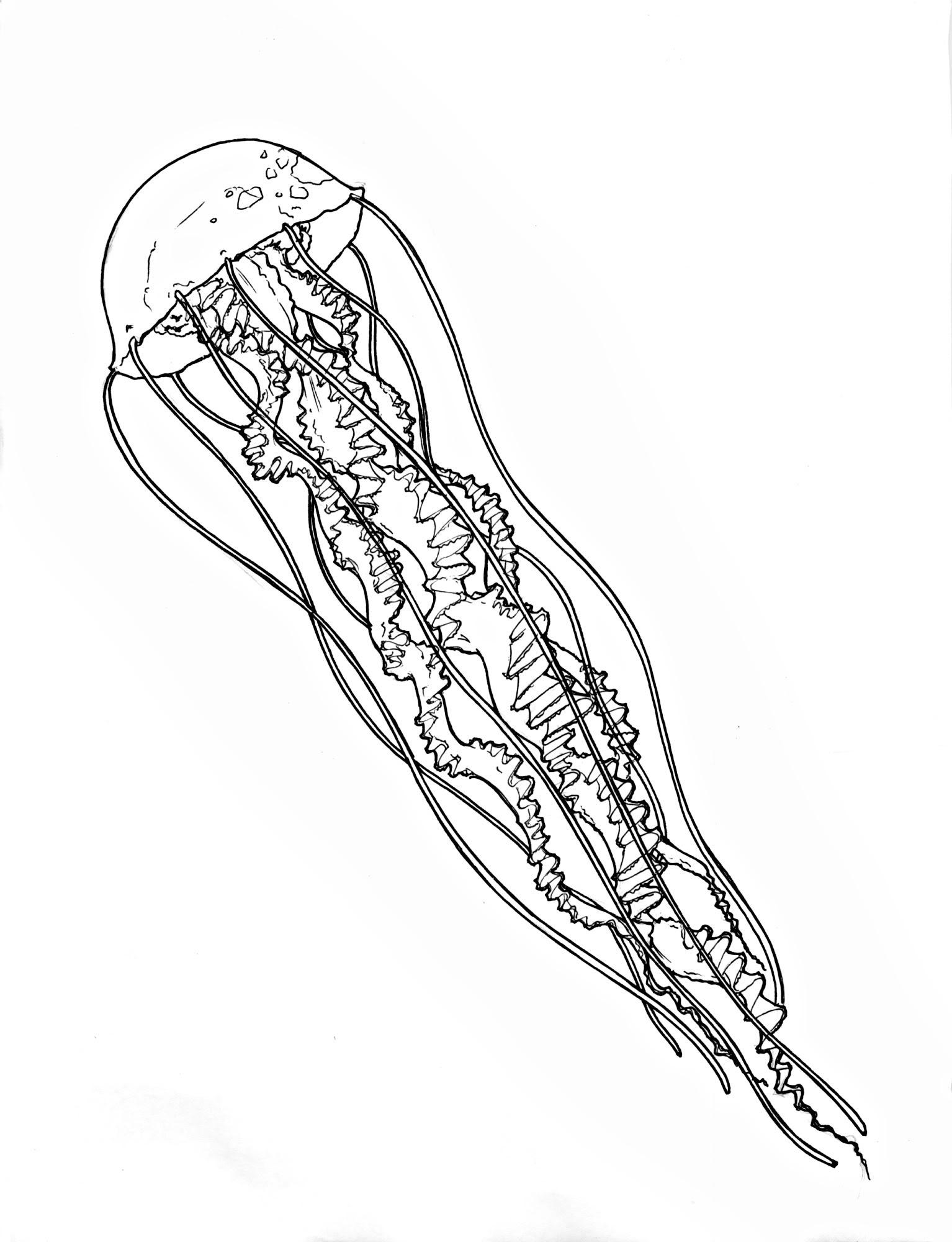 Realistic Jellyfish Drawing At Getdrawings