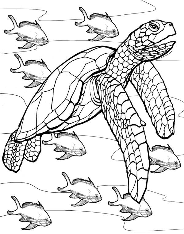 Cute Hawksbill Sea Turtle Coloring Page