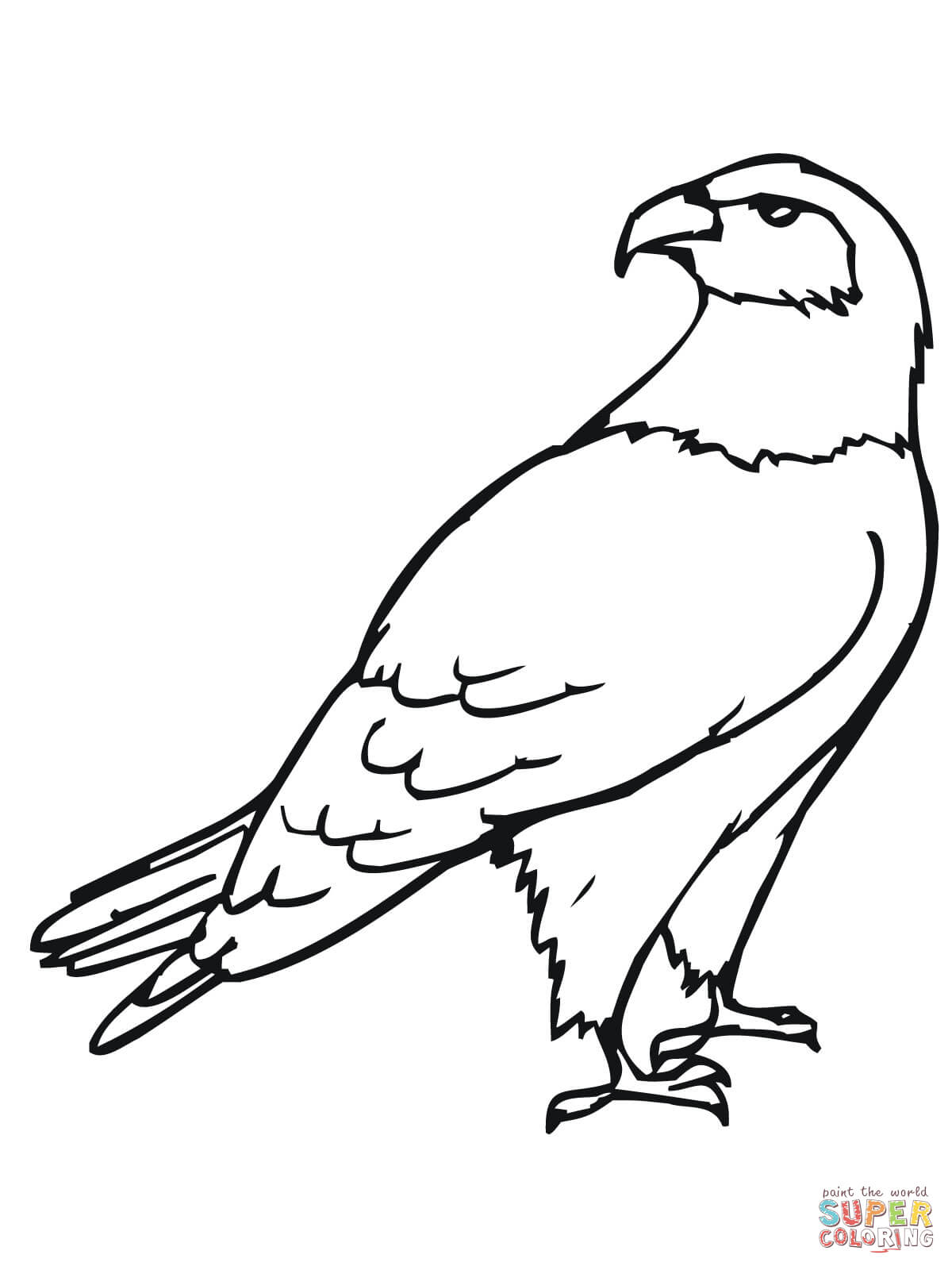 Red Tailed Hawk Drawing At Getdrawings