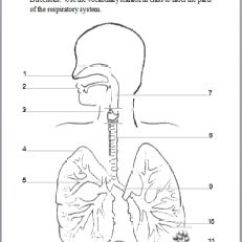 Label The Following Diagram Of Respiratory System Lutron 3 Way Switch With Drawing At Getdrawings Com Free For 231x298 Labeling