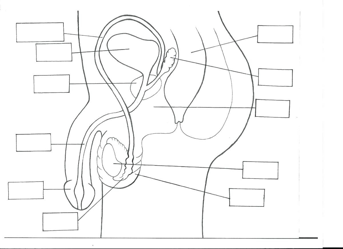 lung diagram drawing hpm single light switch wiring respiratory system with label at getdrawings