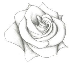 rose drawing pencil easy drawings getdrawings
