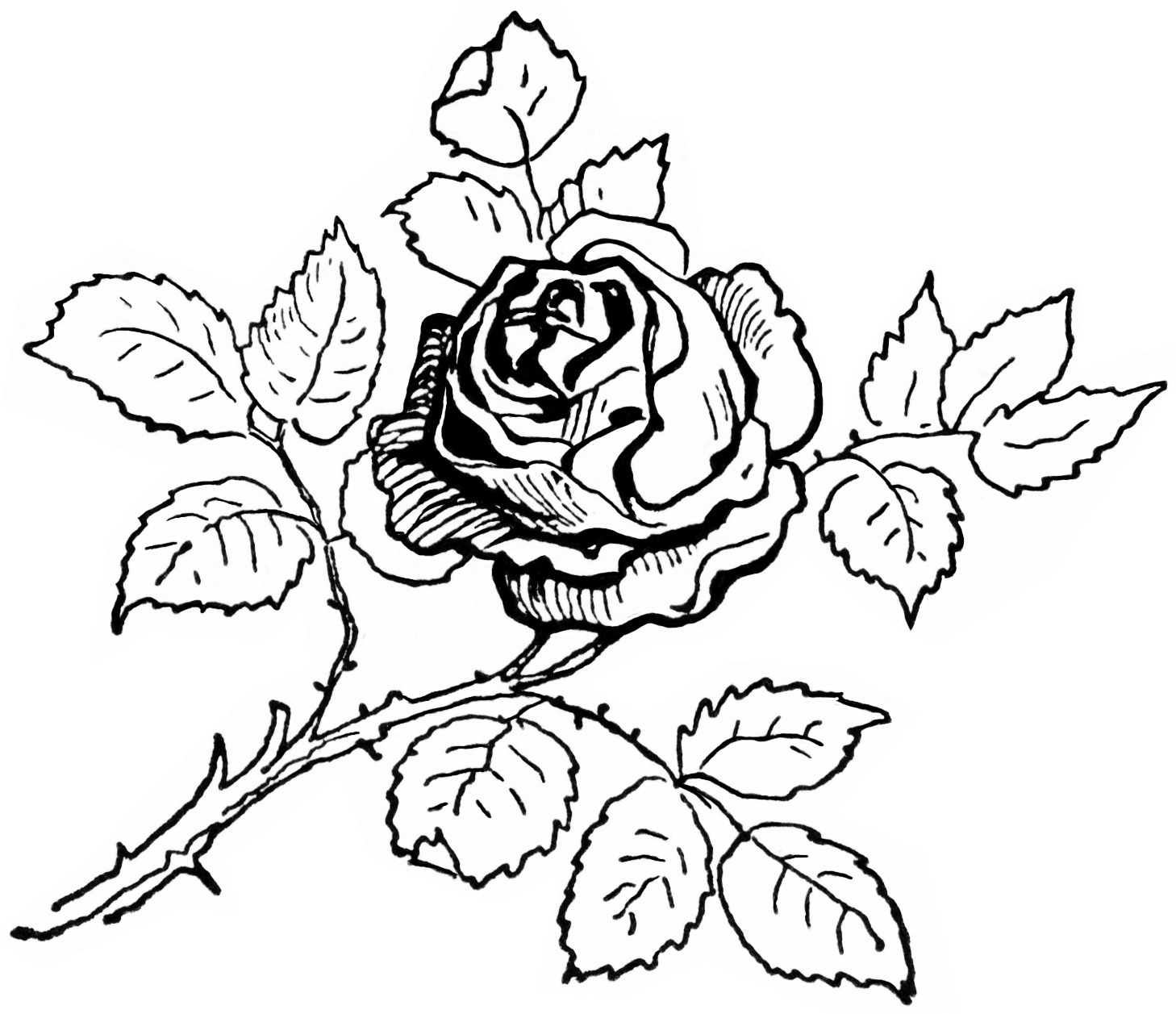 Rose Leaf Drawing At Getdrawings