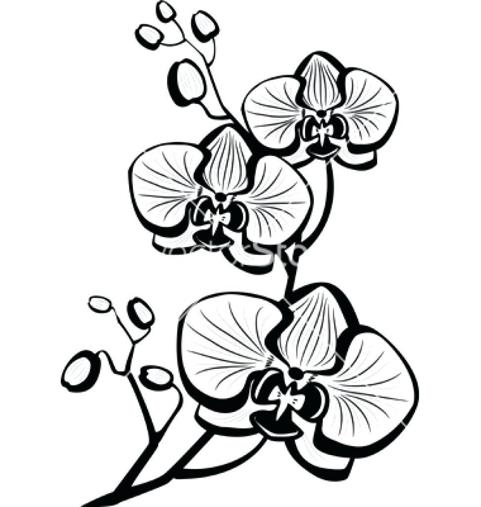 Cataleya Colombian Flower Meaning Classy World