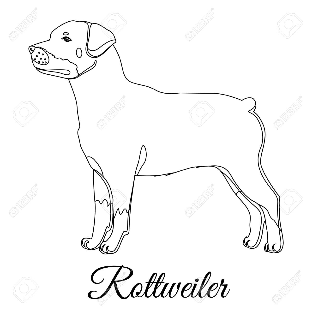 Rottweiler Drawing At Getdrawings