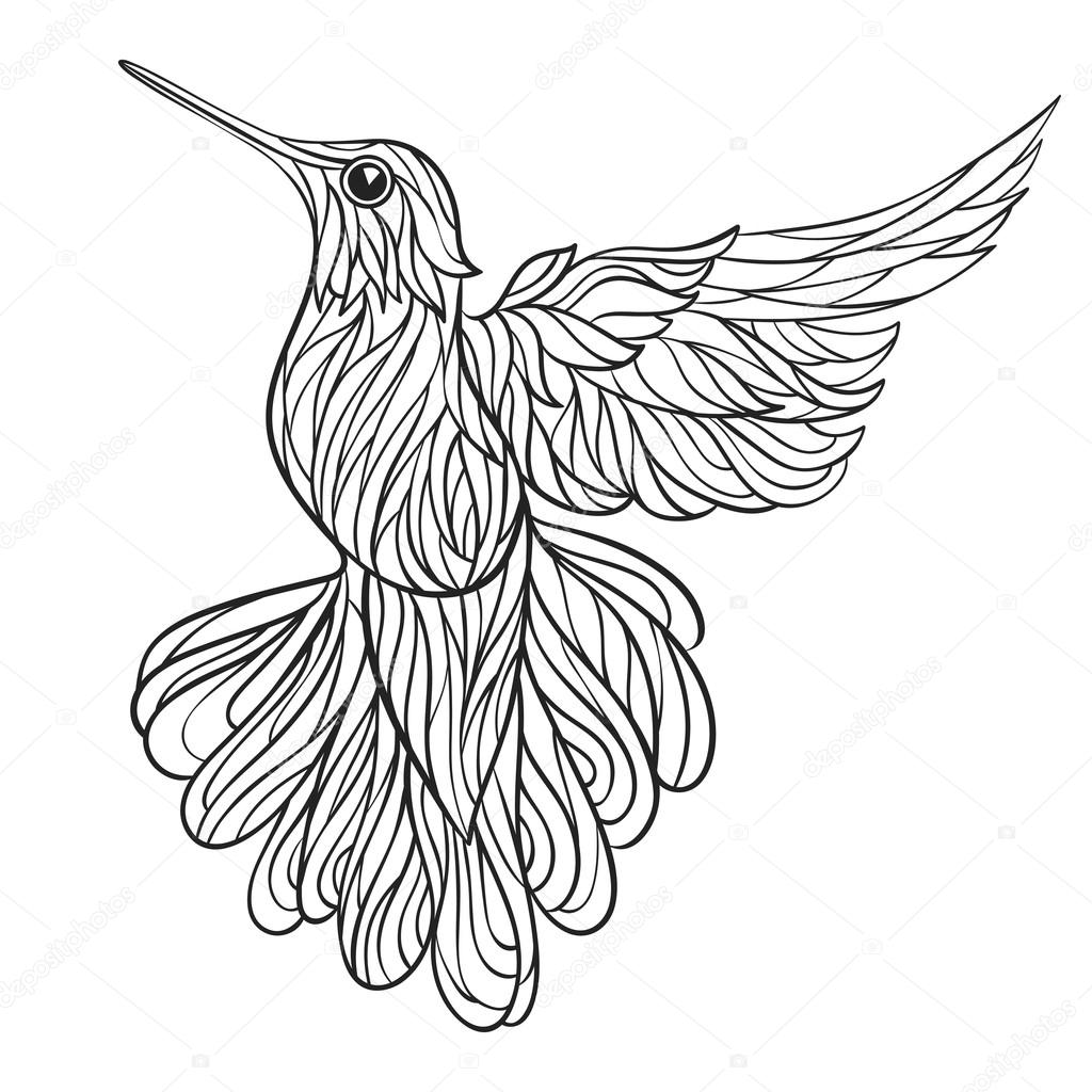 Ruby Throated Hummingbird Drawing At Getdrawings