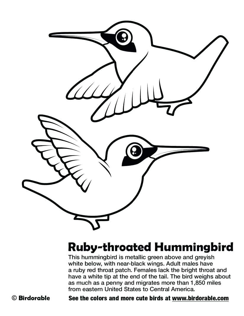 Ruby Throated Hummingbird Drawing at GetDrawings.com