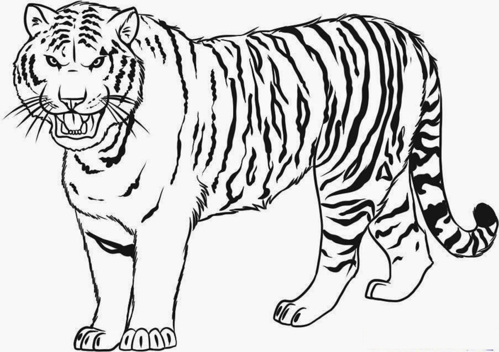 Sabre Tooth Tiger Drawing At Getdrawings