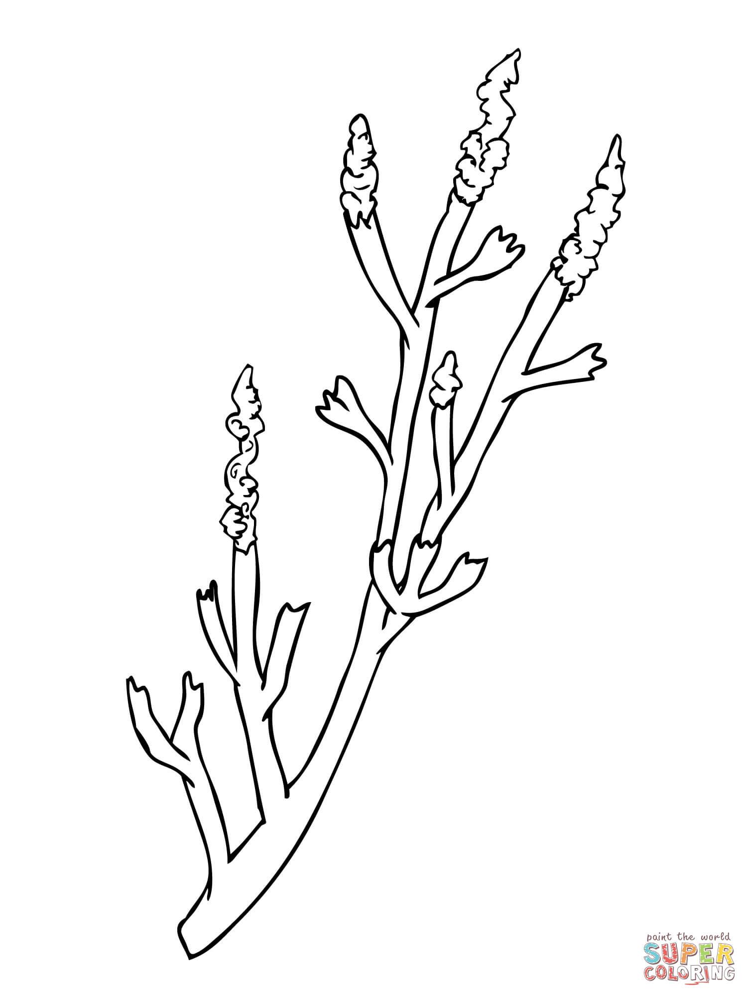 Sagebrush Drawing At Getdrawings