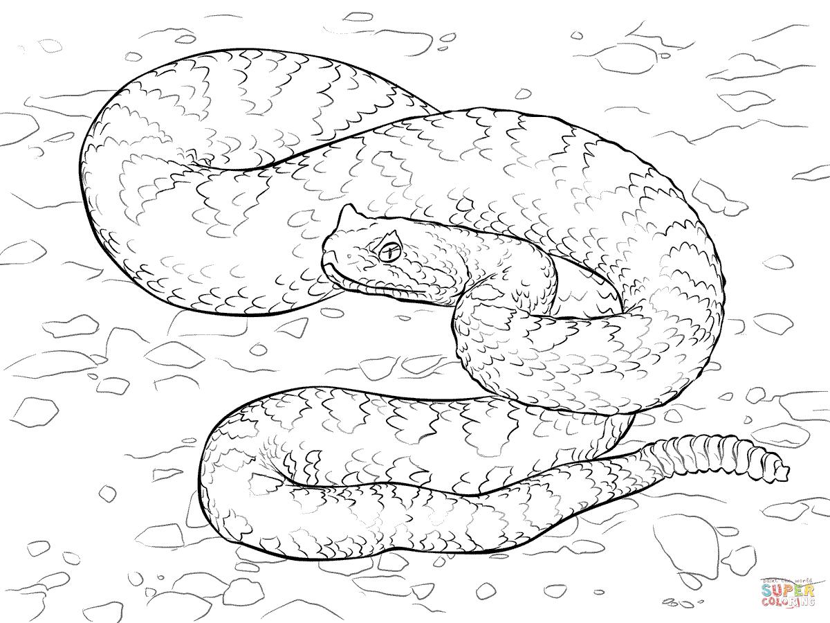 Sahara Desert Drawing At Getdrawings