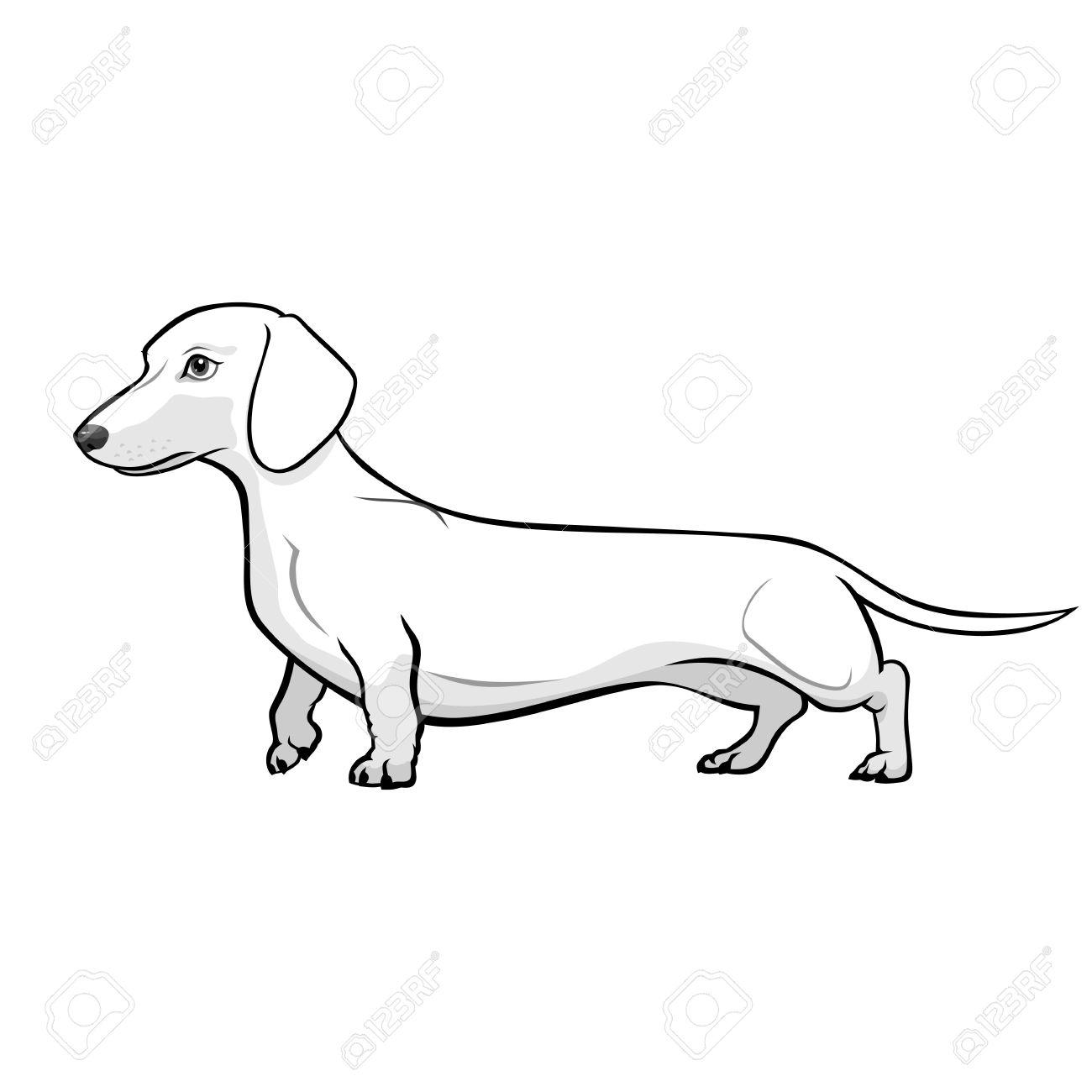 Sausage Dog Drawing At Getdrawings