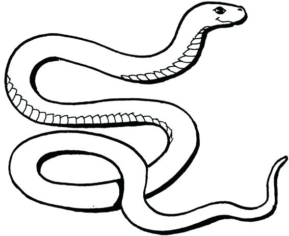 Snake Skull Drawing At Getdrawings Com