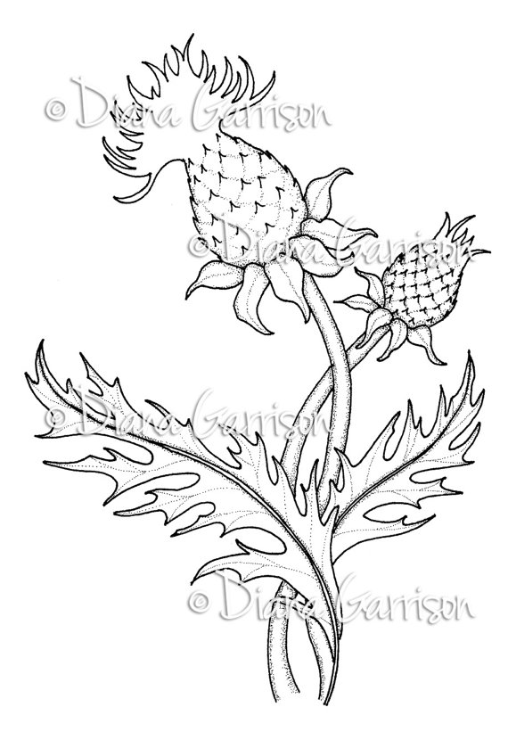 Tline Of Clyde Thistle Colouring Pages