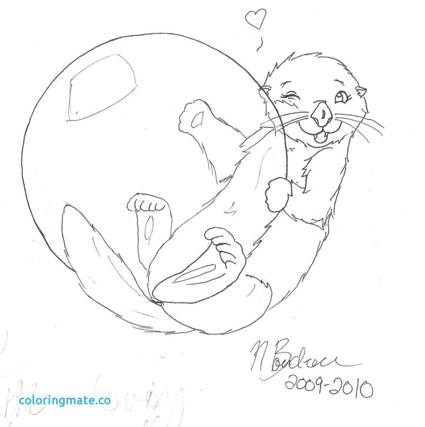 sea otter drawing at getdrawings  free download