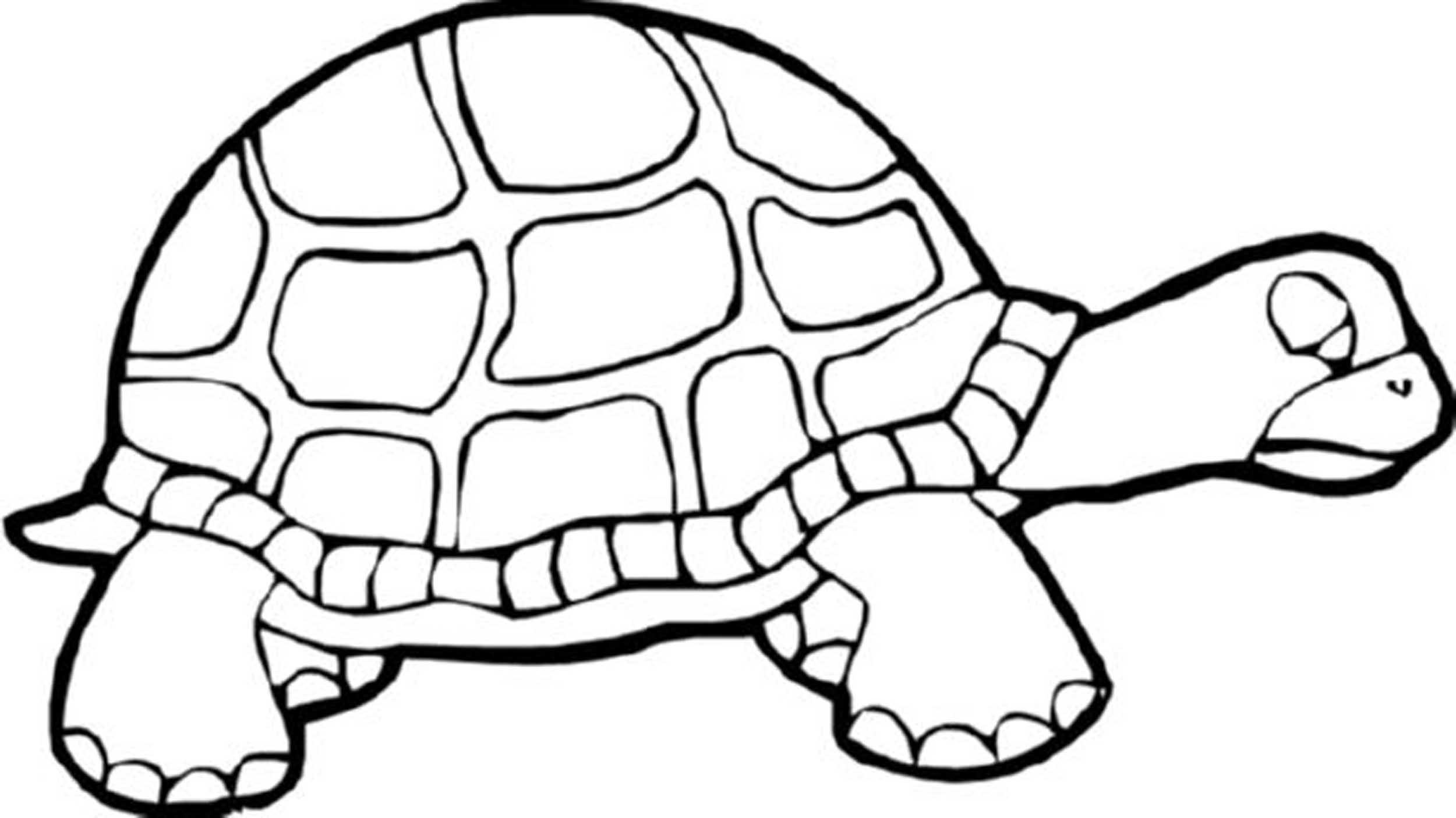 Sea Turtle Line Drawing At Getdrawings