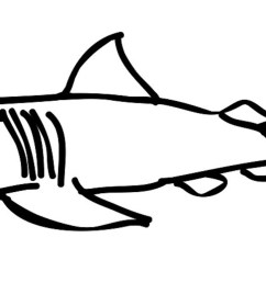 1600x777 shark drawing template clipart best lemon shark coloring page [ 1600 x 777 Pixel ]