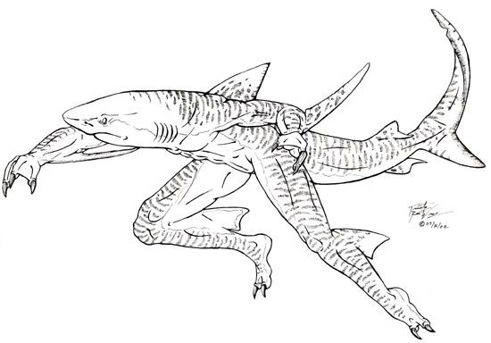 Megalodon Shark Drawing At Getdrawings Com