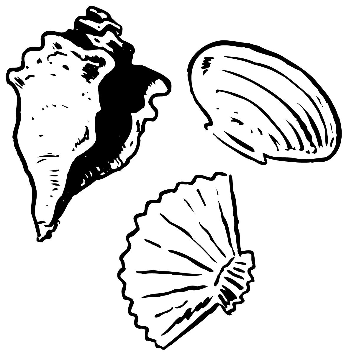 Shells Drawing At Getdrawings