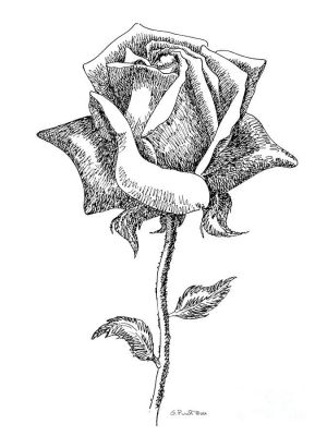 drawing simple sketches rose getdrawings