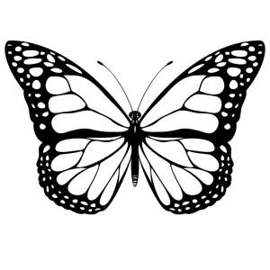 butterfly simple drawing sketch getdrawings