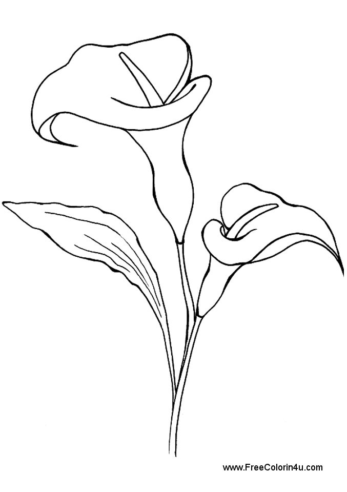 Lily Flower Tattoo Drawing At Getdrawings Com