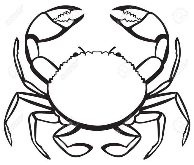 Crab Diagram With Labels The Best Crab 2018