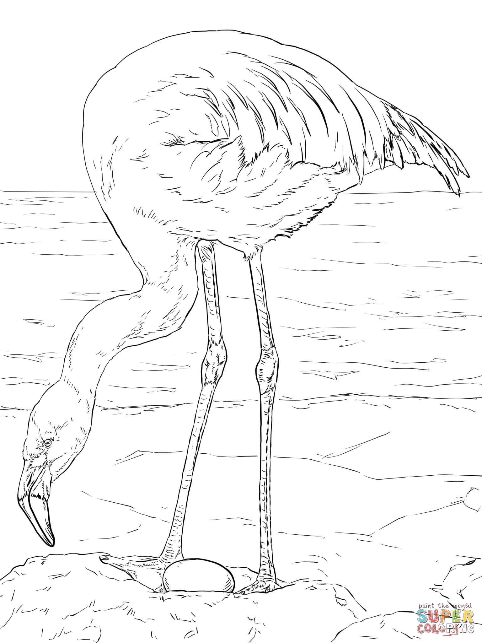 Simple Flamingo Drawing At Getdrawings