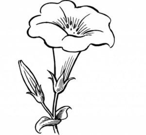 flower flowers drawing simple drawings rose draw easy vine line pattern getdrawings clipartmag designs pencil jasmine paintingvalley picked lessons hand