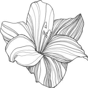 flower drawing line simple getdrawings