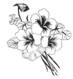 flowers designs flower drawing pattern draw floral patterns drawings simple easy getdrawings paper tattoo tuesday digital embroidery pages digitaltuesday carnivore