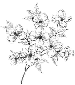 flower simple pattern drawing patterns draw easy pretty designs rose marker getdrawings