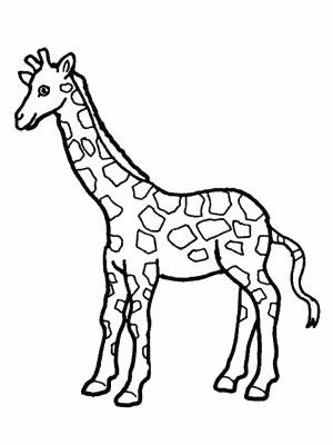 giraffe drawing simple cartoon getdrawings