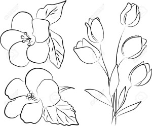 flower drawing flowers drawings hibiscus bouquet easy simple outline tulip roses line sketches sketch leaf hand freehand bunch blossom cherry