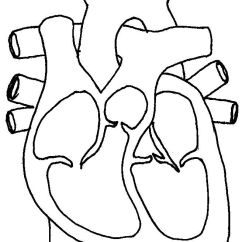Realistic Heart Diagram 7 Pin Trailer Wiring Simple Human Drawing At Getdrawings Com Free For Personal 656x864 Template Best 25 Of The Ideas