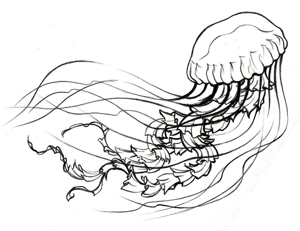 Simple Jellyfish Drawing At Getdrawings