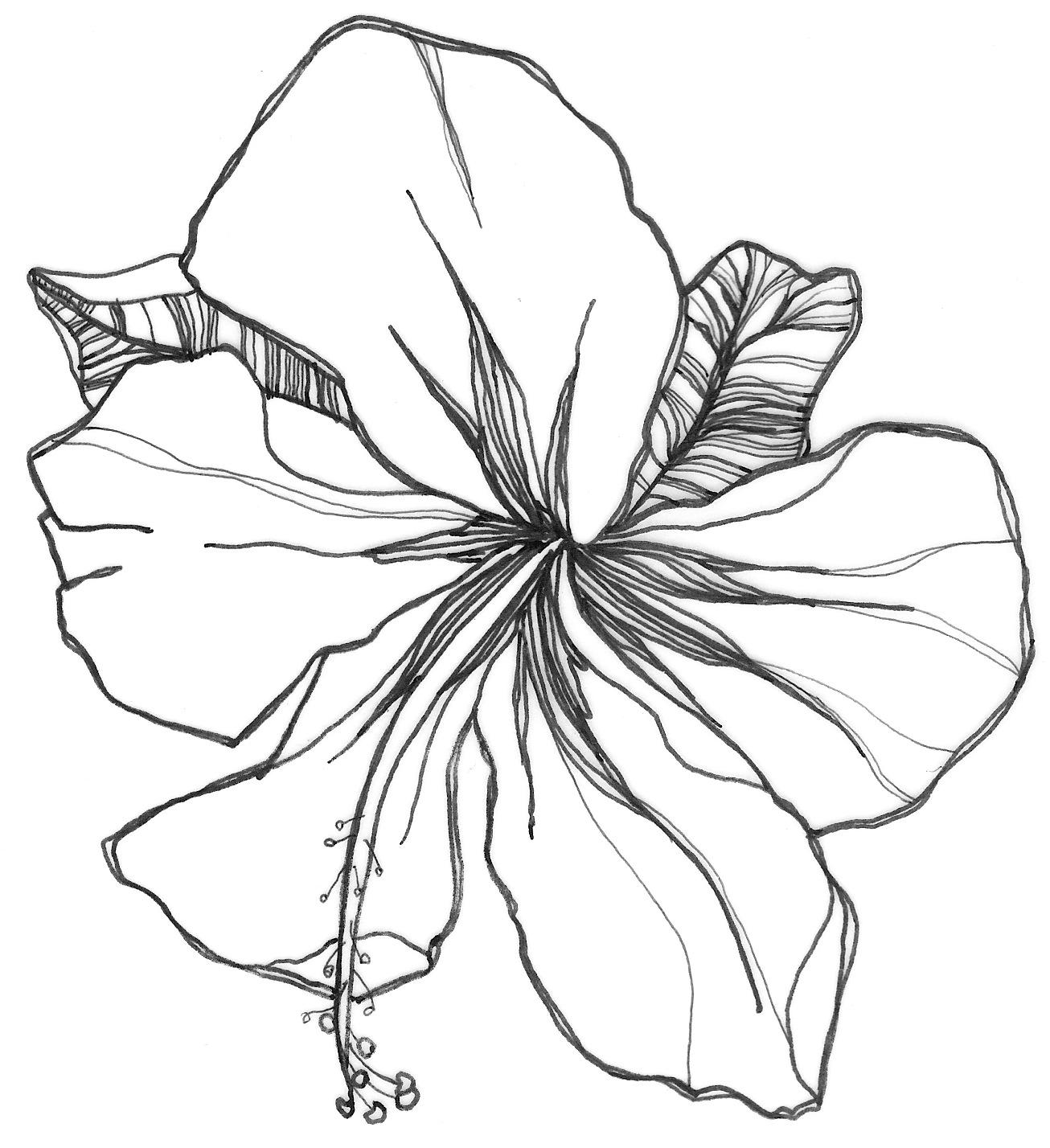 Simple Lavender Drawing At Getdrawings