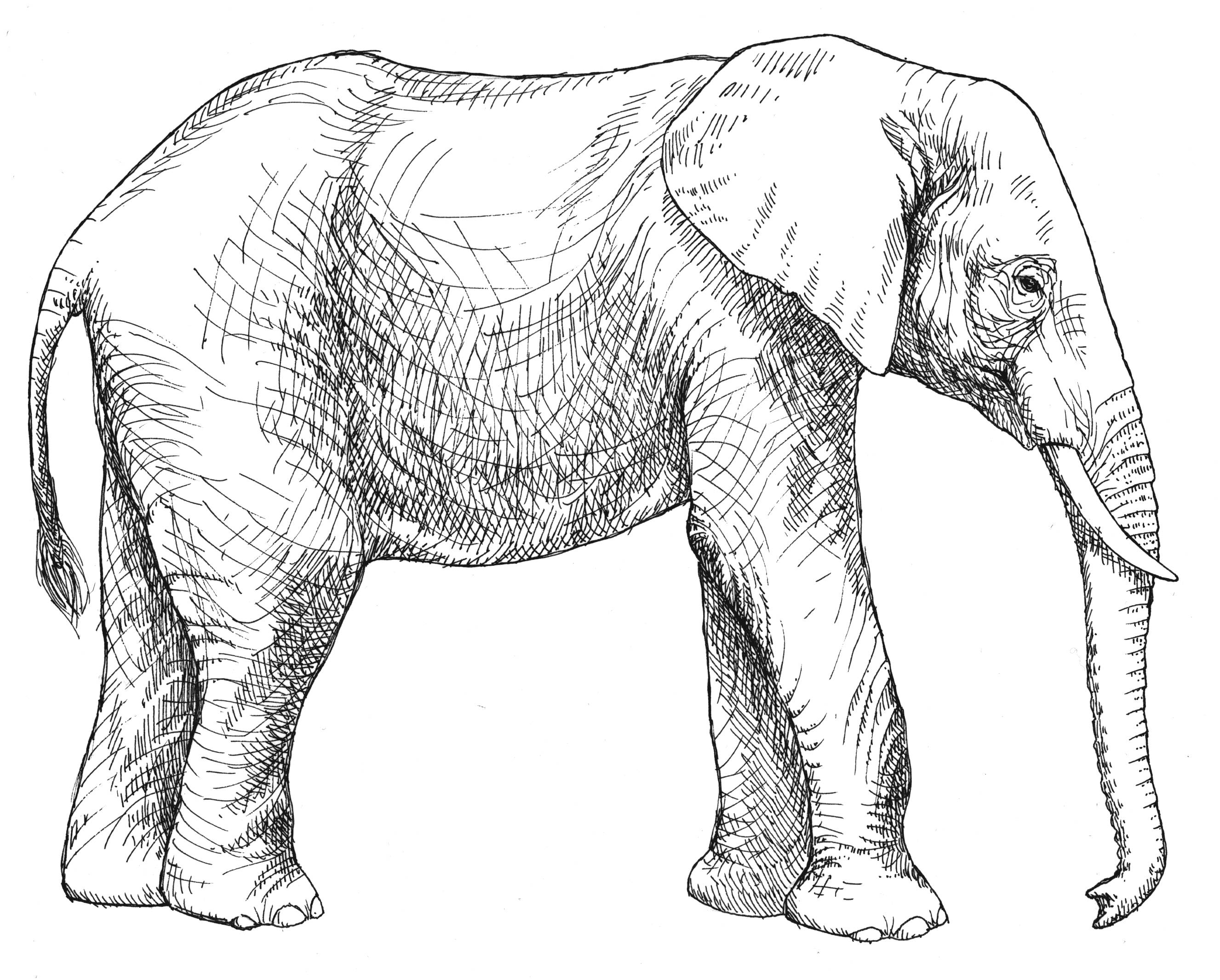Simple Line Drawing Elephant At Getdrawings
