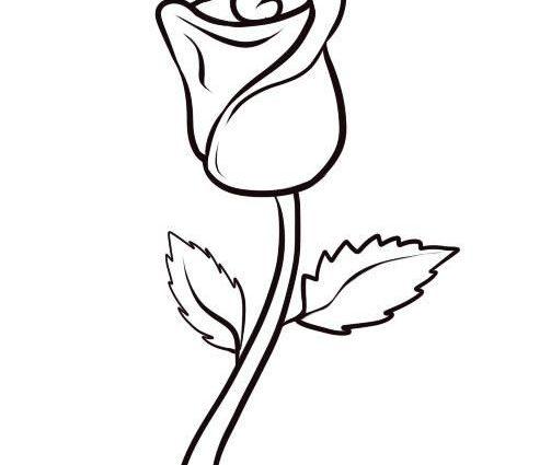 Long Stem Rose Drawing At Getdrawings Com
