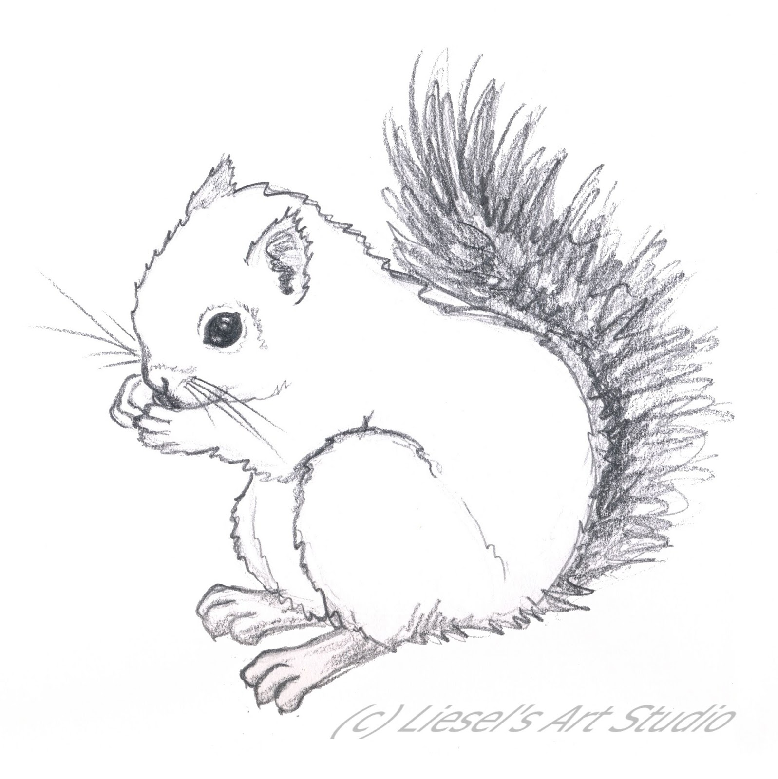 simple squirrel drawing at