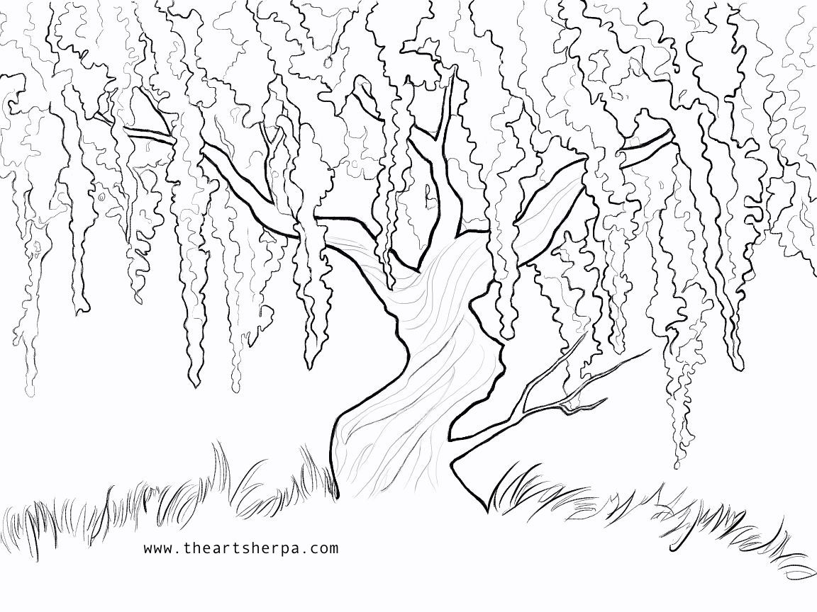Simple Willow Tree Drawing At Getdrawings