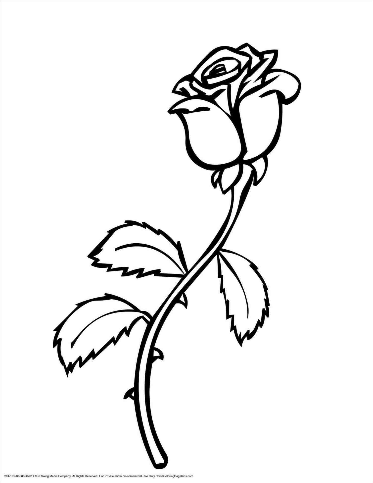 Single Red Rose Drawing At Getdrawings