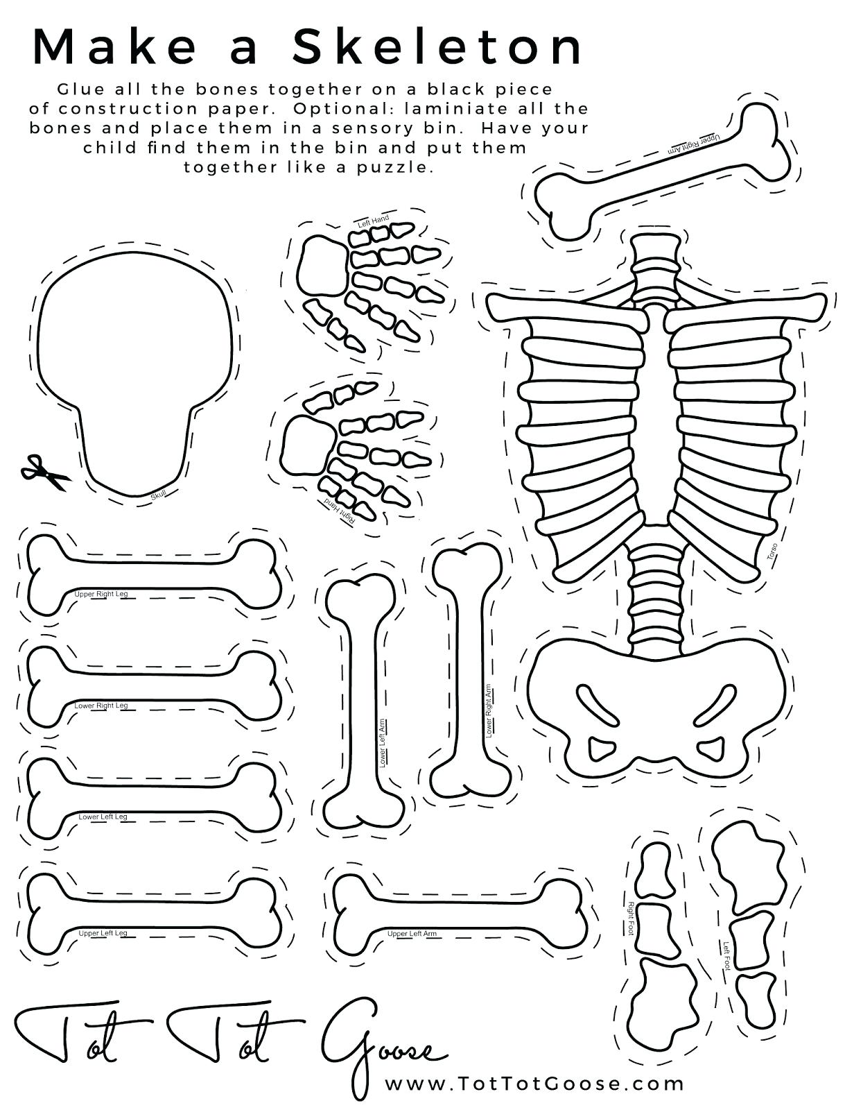 Skeletal System Drawing At Getdrawings