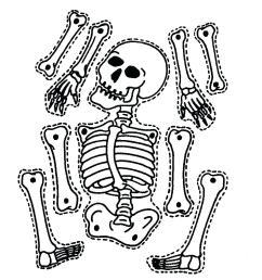 1481x1484 diagram sea animal skeleton diagram [ 1481 x 1484 Pixel ]
