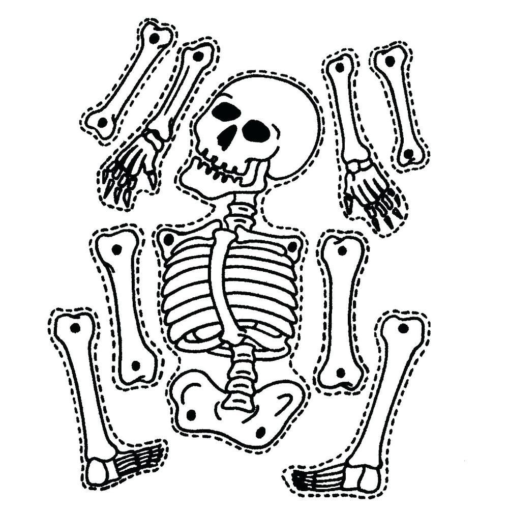 medium resolution of 1481x1484 diagram sea animal skeleton diagram