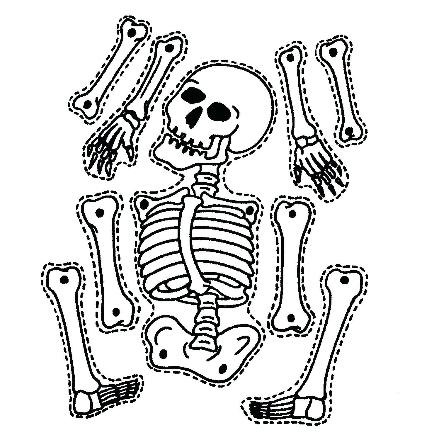 hight resolution of 1481x1484 diagram sea animal skeleton diagram